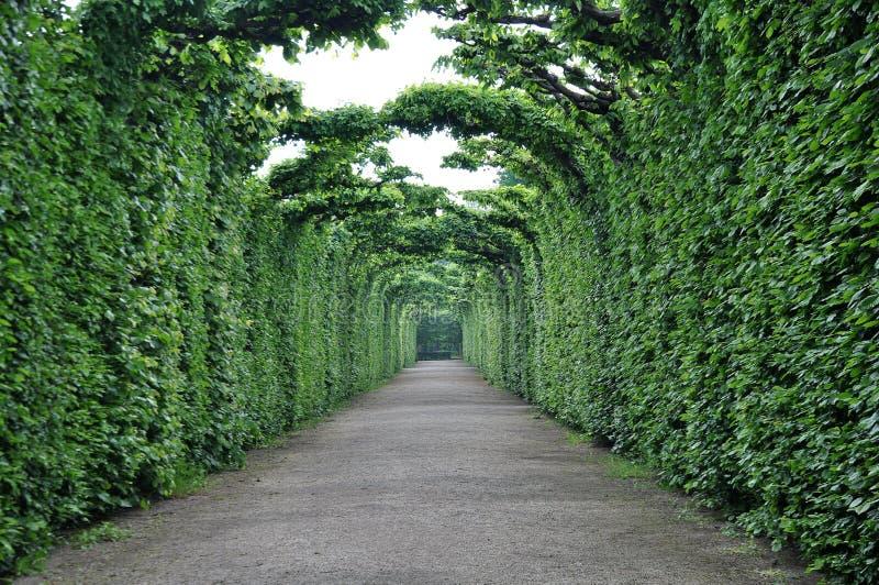 Grüner Pfad im Wald lizenzfreies stockbild