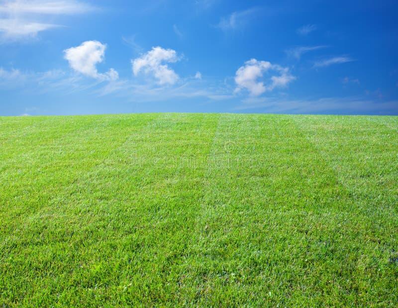 Grüner Rasen stockfotos