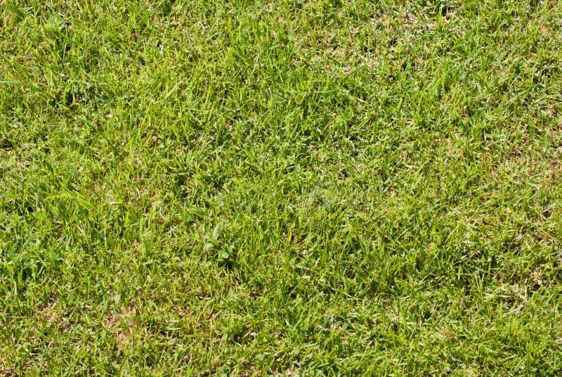 Grüner Rasen stockfotografie
