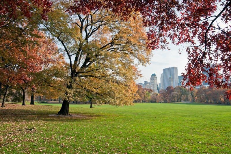 Grüner Rasen in Central Park stockbilder