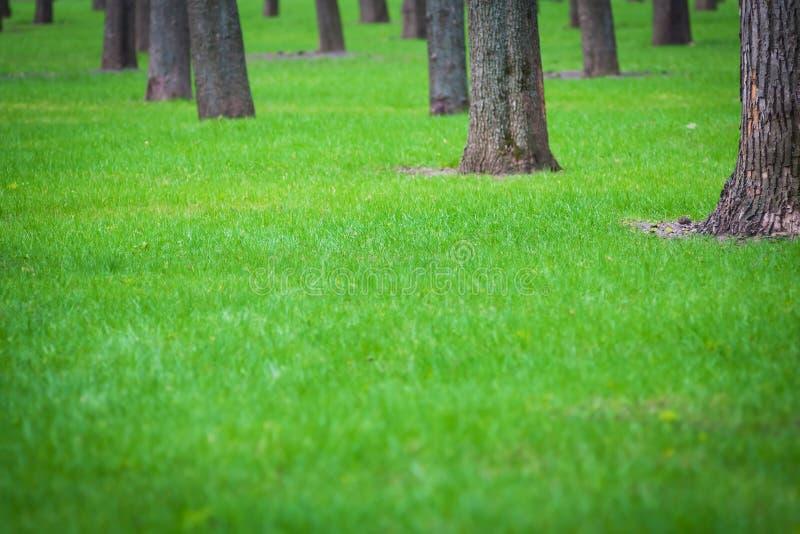 Grüner Rasen des Frühlinges unter den Bäumen stockbilder