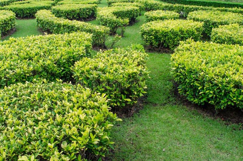 Grüner Rasen in einem bunten landschaftlich gestalteten formalen Garten. lizenzfreie stockbilder