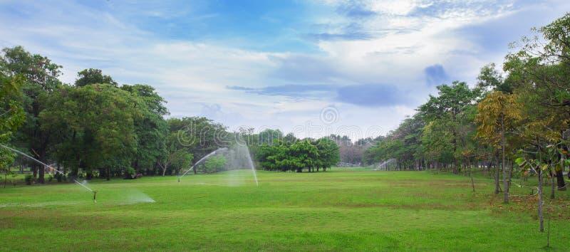Grüner Rasen eines geräumigen Stadt-Parks stockfotos