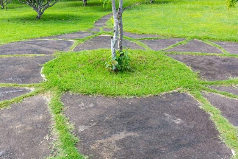 Grüner Rasen in Form der Kreise stockbilder