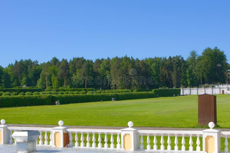Grüner Rasen im Park. stockfotos