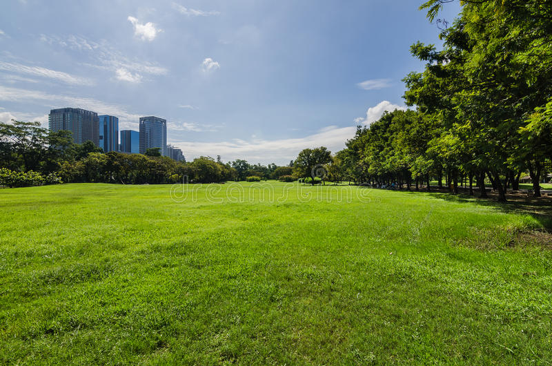 Grüner Rasen mit Baum und Gebäuden lizenzfreies stockbild