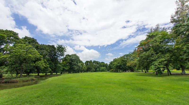 Grüner Rasen und Bäume mit blauem Himmel am allgemeinen Park stockbilder