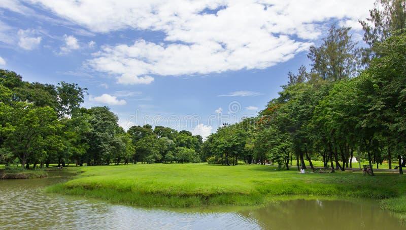 Grüner Rasen und Bäume mit blauem Himmel am allgemeinen Park lizenzfreie stockbilder