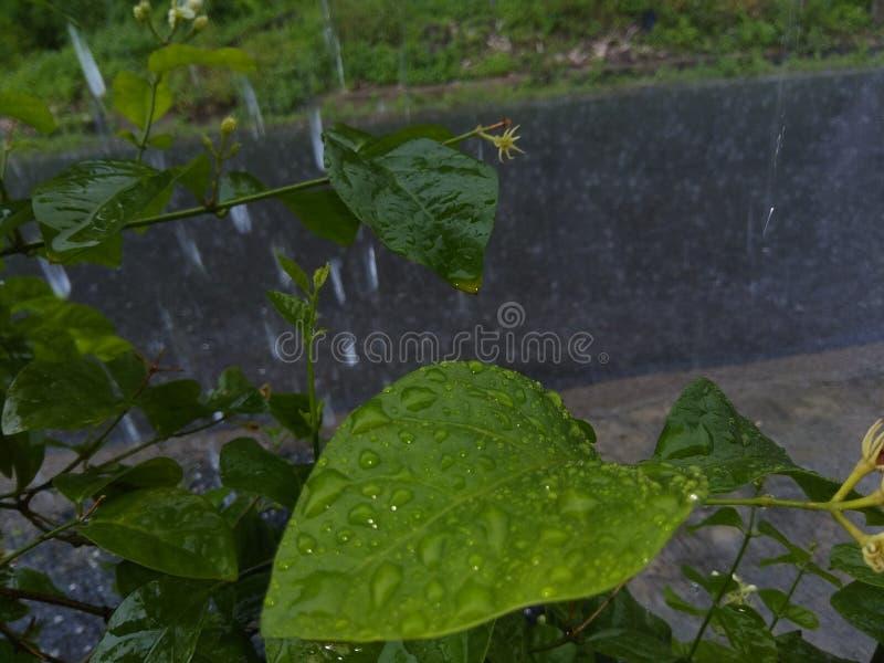 Grüner Regen lizenzfreie stockfotografie