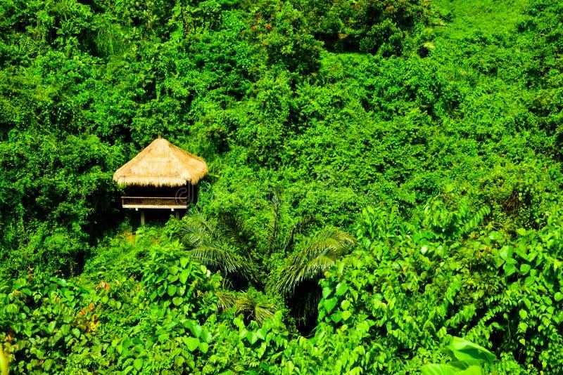 Grüner Regenwaldtropischer Dschungel und romantisches Hüttenansichtabenteuer in Ostasien stockbild
