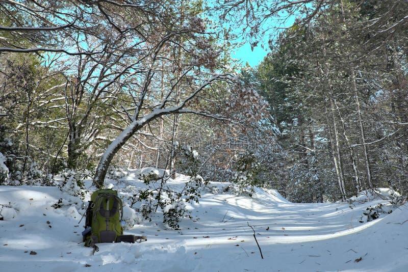 Grüner Rucksack auf Schnee bedeckte Weg im schneebedeckten Holz von Etna Park stockfotos