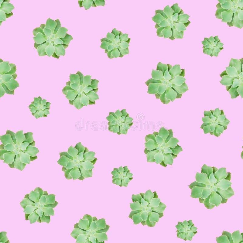 Grüner saftiger Betriebsmuster-Rosa-Hintergrund stockfotografie