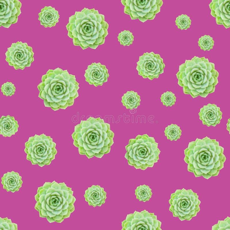 Grüner saftiger Betriebsmuster-Rosa-Hintergrund lizenzfreie stockfotos