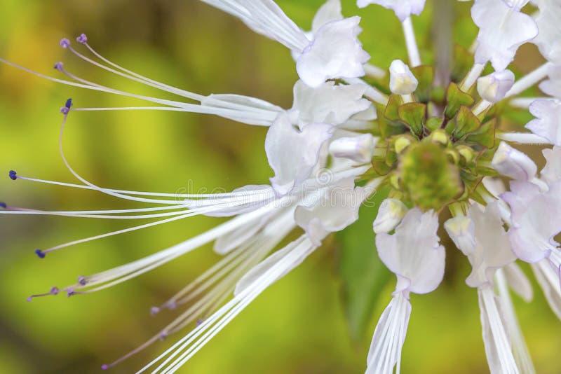 Grüner schöner Garten und Blumen stockfotos