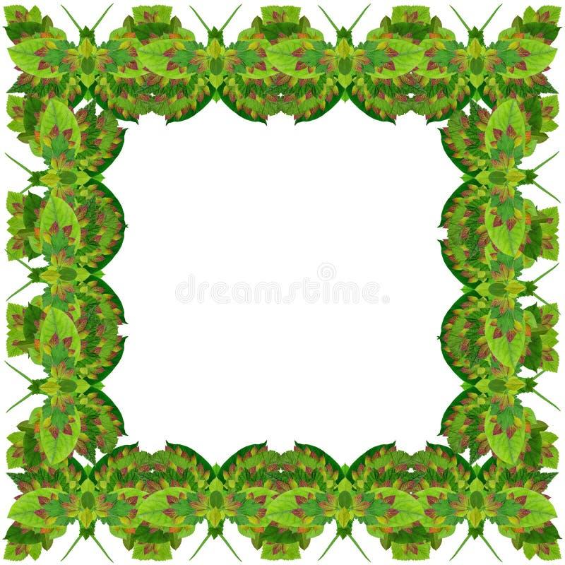 Grüner Schmetterlingsfotorahmen lizenzfreie abbildung