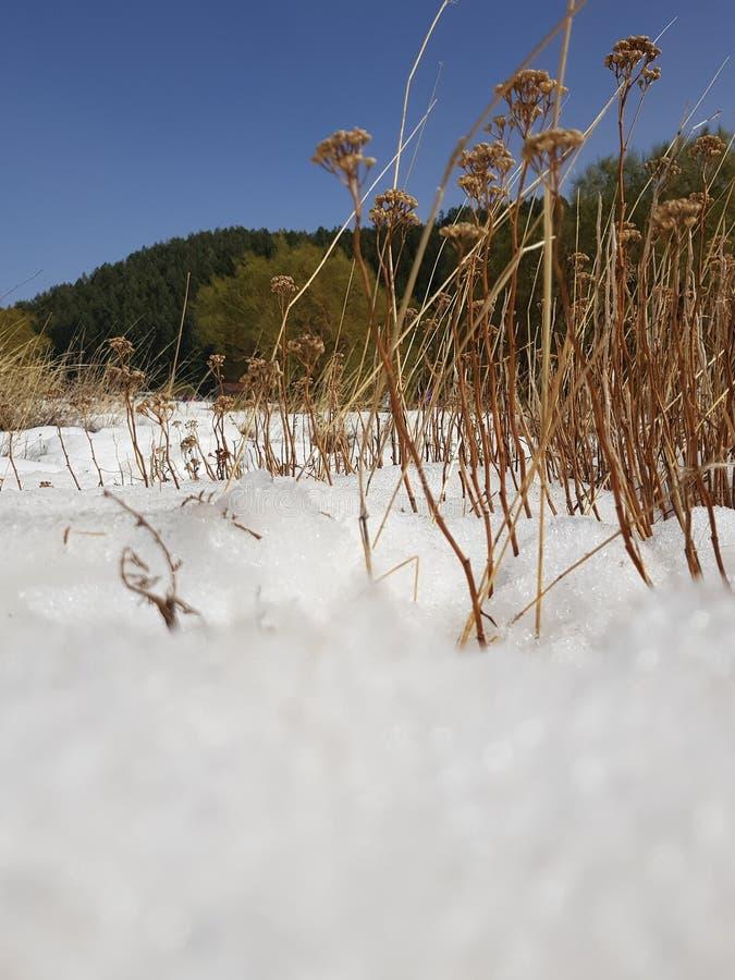 Grüner Schnee stockbilder