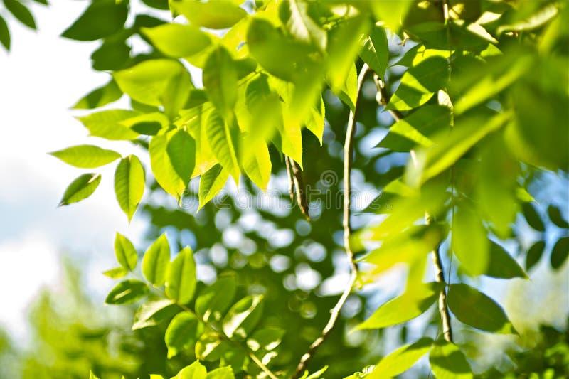 Grüner Sommer lizenzfreies stockbild