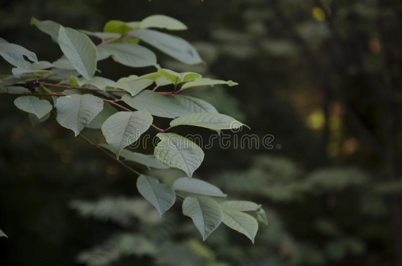 Grüner Sommerwald an einem sonnigen Nachmittag lizenzfreies stockbild