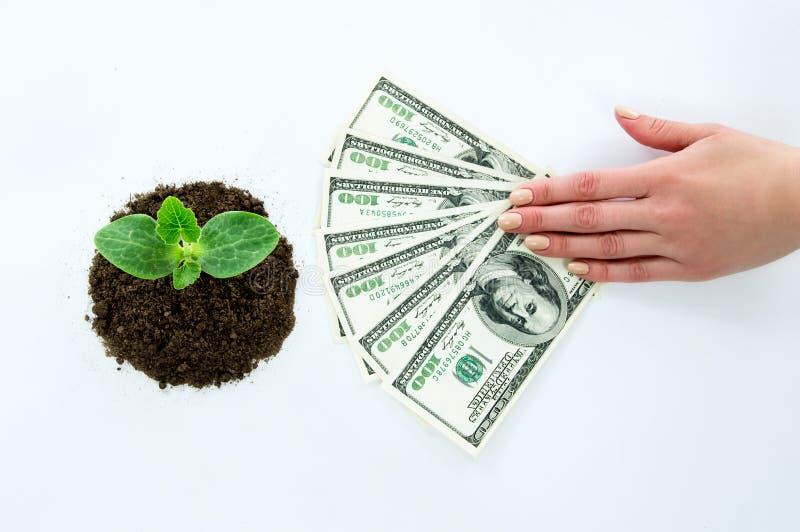 Grüner Sprössling, Hände, die Geld halten stockfotos