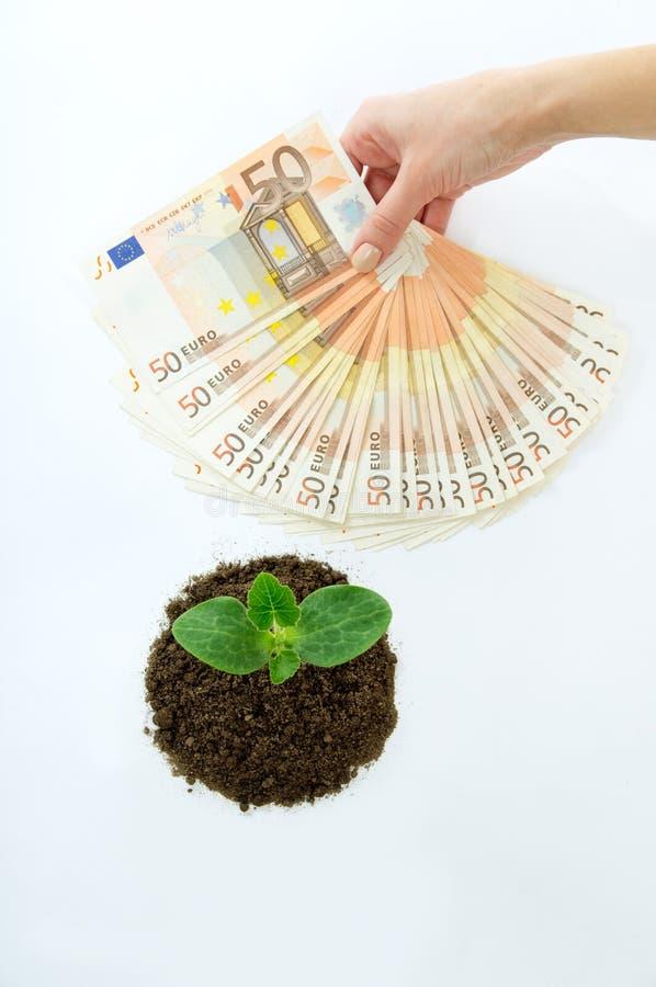 Grüner Sprössling mit dem Geldeuropäer lokalisiert stockbild