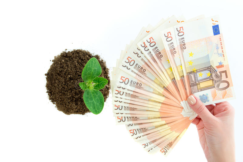 Grüner Sprössling mit Geldeuropäer stockbilder