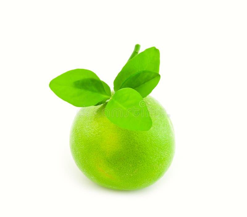 Grüner Sweetie mit Blättern stockbild