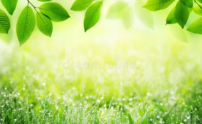 Grüner szenischer Hintergrund des Sommers des natürlichen Frühlinges mit Rahmen des Grases mit Tau und Blättern in der Natur lizenzfreies stockbild