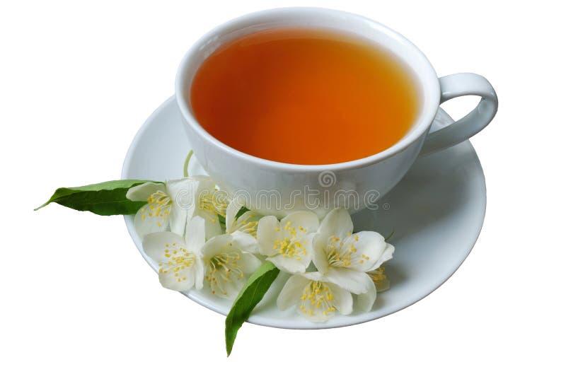 Grüner Tee des Jasmins stockbilder