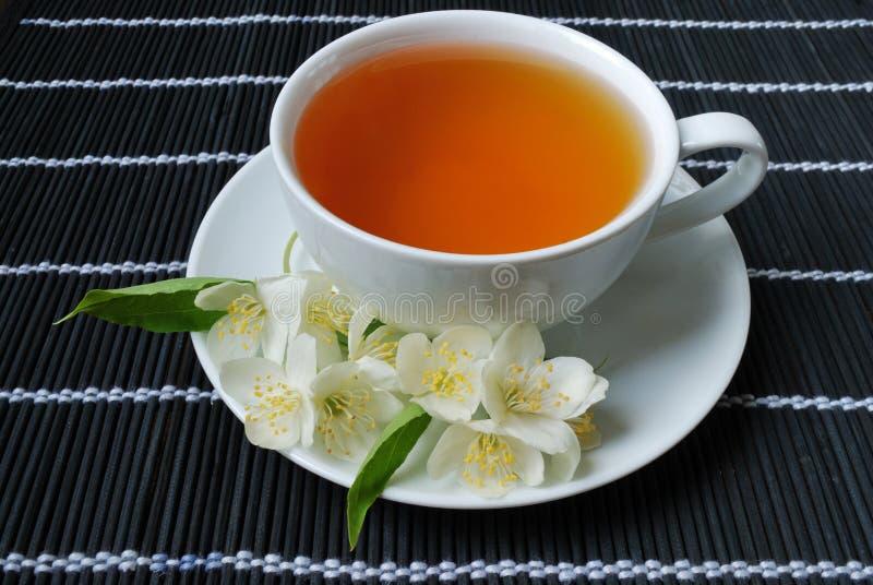 Grüner Tee des Jasmins lizenzfreie stockfotografie