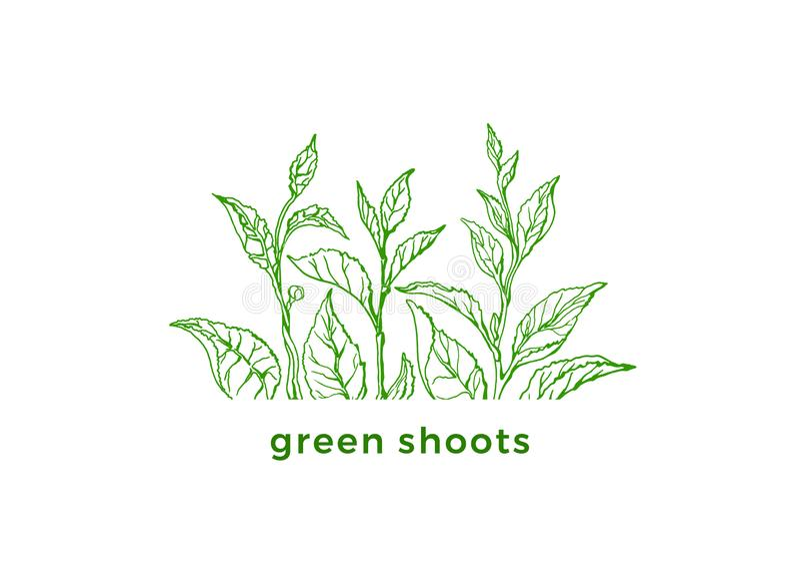 Grüner Tee des Vektors Neuer Entwurf des Frühlinges Ökologieaufkleber, Bioaufkleber stock abbildung