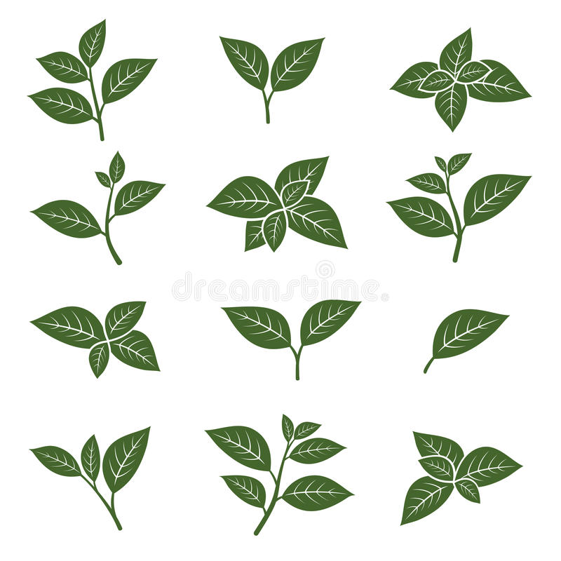 Grüner Teeblattsammlungssatz Vektor stock abbildung