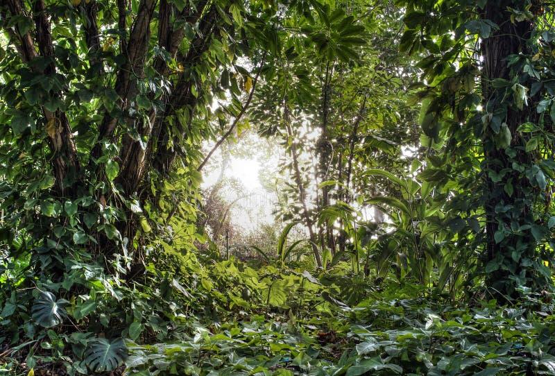 Grüner tropischer Wald stockfotografie