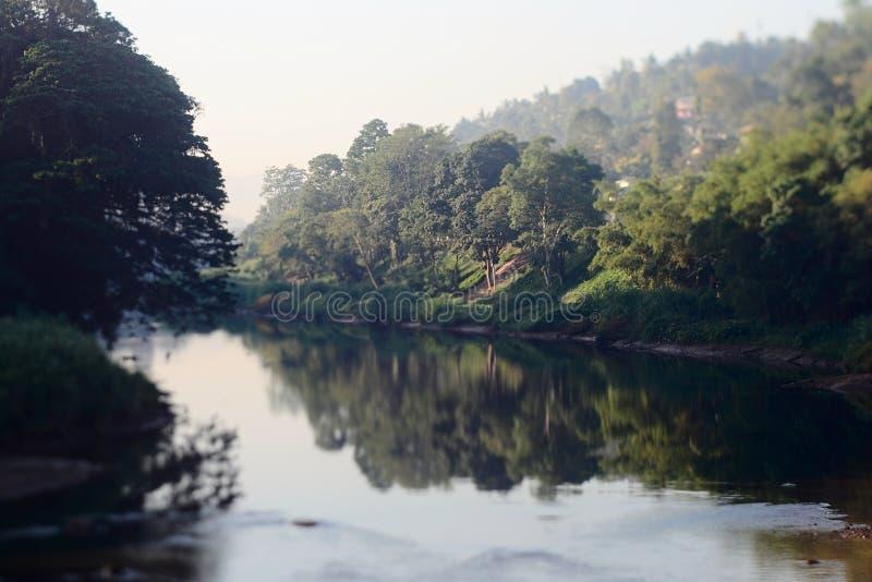 Grüner tropischer Wald reflektiert im Wasser lizenzfreie stockbilder