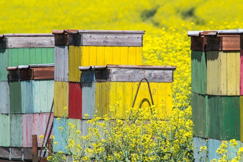 Grüner und grauer Frühlingsfeld-Zusammenfassungshintergrund lizenzfreie stockbilder
