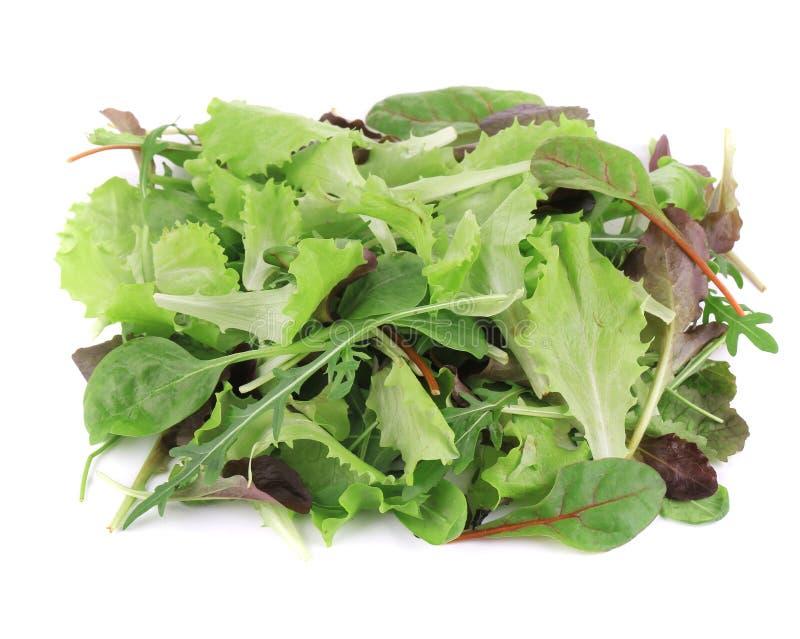 Grüner und roter Blatt-Kopfsalat. lizenzfreie stockfotografie
