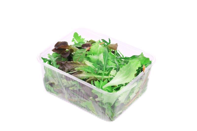 Grüner und roter Blatt-Kopfsalat stockbilder