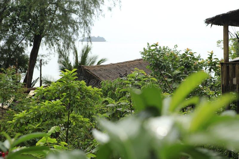 Grüner Urlaub im Dschungel stockbild