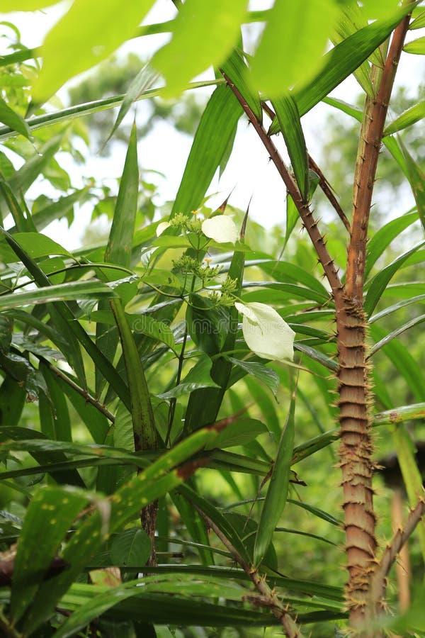 Grüner Urlaub im Dschungel stockfoto