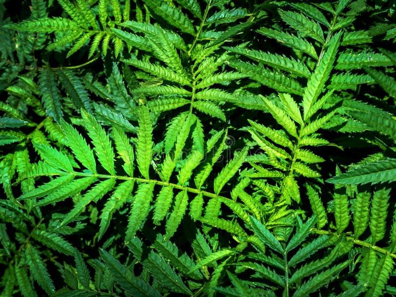 Grüner Urlaubbeschaffenheitshintergrund 02 stockfotografie