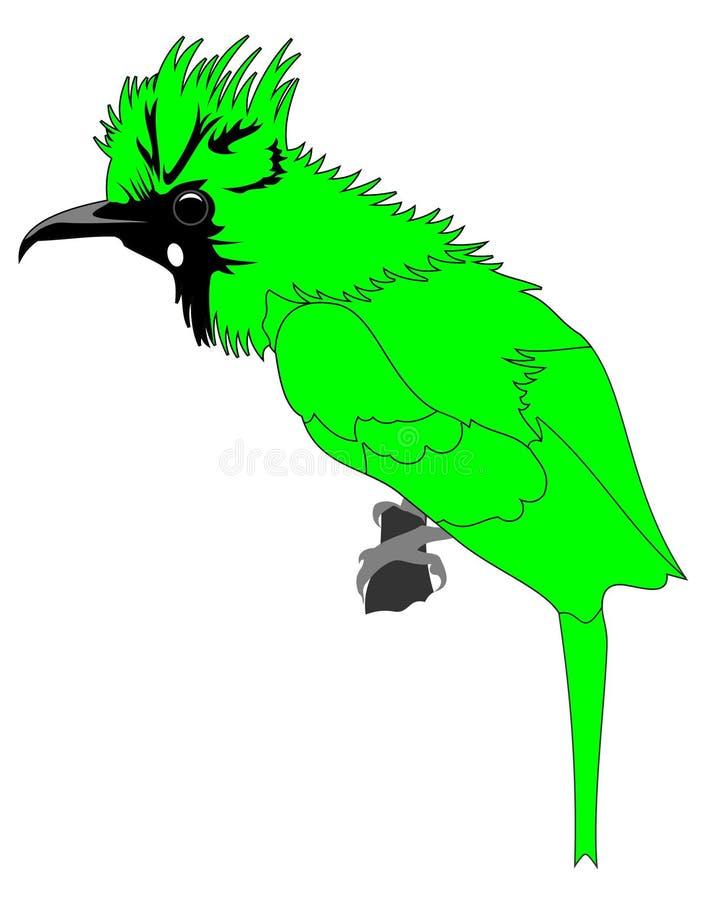 Grüner Vogelvektor lizenzfreies stockbild