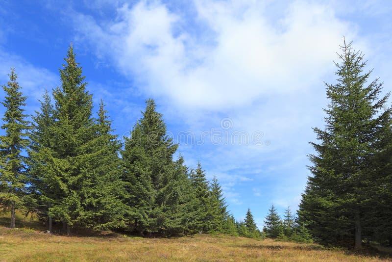 Grüner Wald lizenzfreie stockfotos