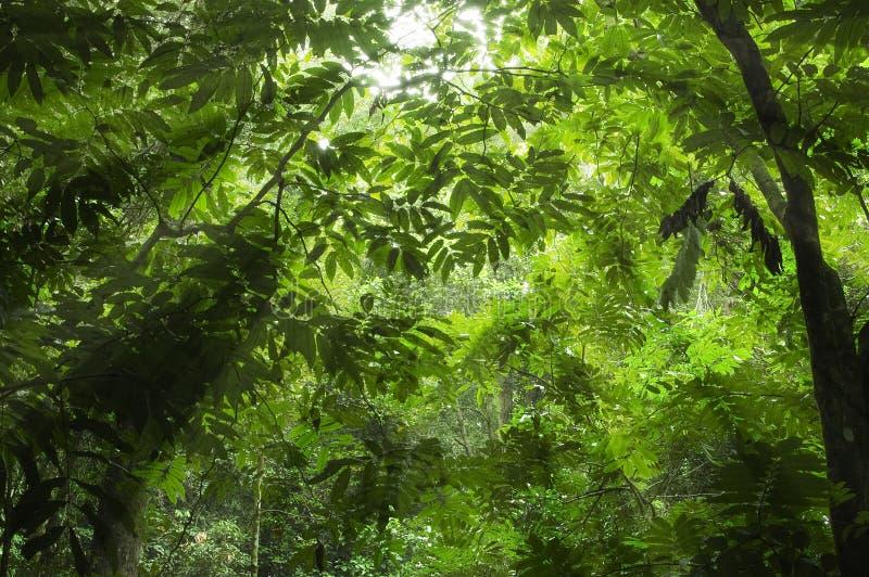 Grüner Wald stockfoto