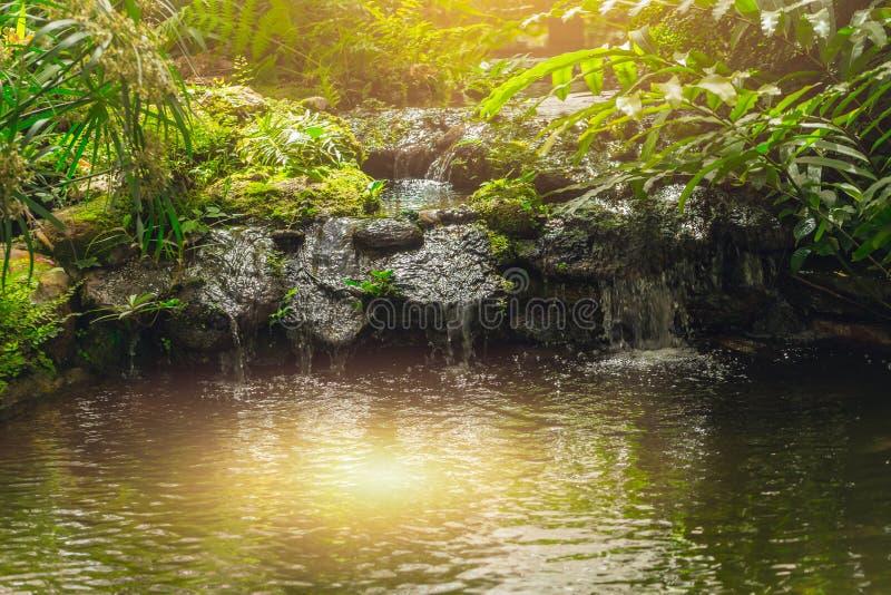 Grüner Wald mit Wasserfallruhemorgen-Sonnenlicht stockbilder