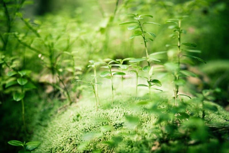 Grüner Waldhintergrund stockfotos