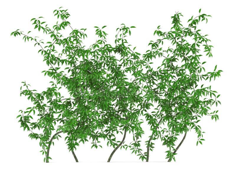 Grüner Wandbusch lizenzfreie abbildung