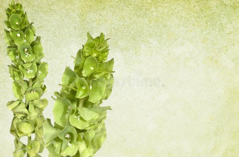 Grüner Weinlese-mit Blumenhintergrund lizenzfreie stockbilder