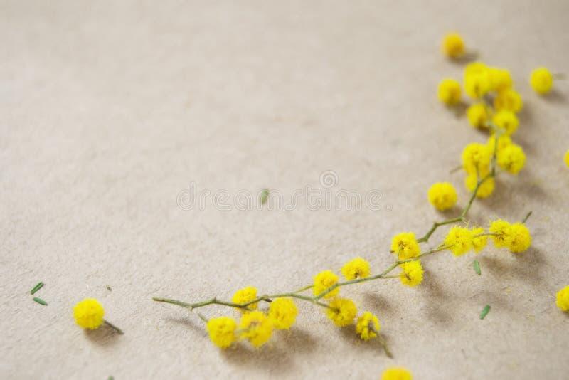 Grüner Zweig der Mimose mit gelben Blumen auf Kraftpapier lizenzfreie stockfotos