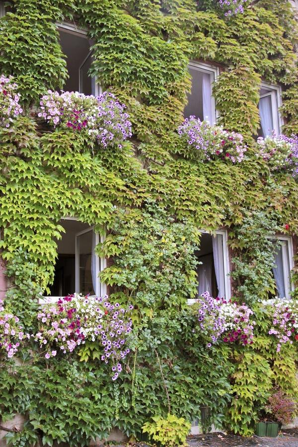 Grünes überwuchertes Haus stockfotografie