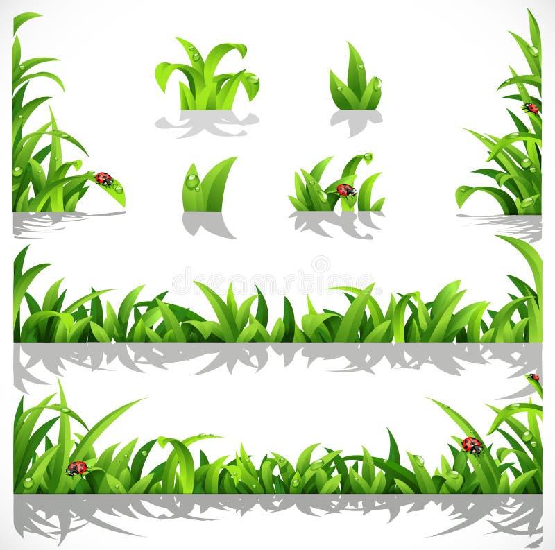 Grünes üppiges Gras mit Tau und Marienkäfern lizenzfreie abbildung