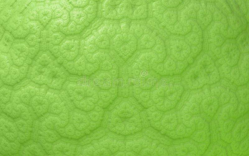 Grünes abstraktes nahtloses Muster lizenzfreie abbildung